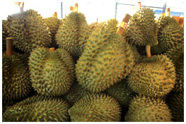 Export Thai Durian